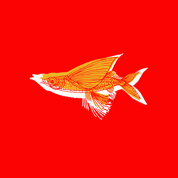poisson-rougeweb