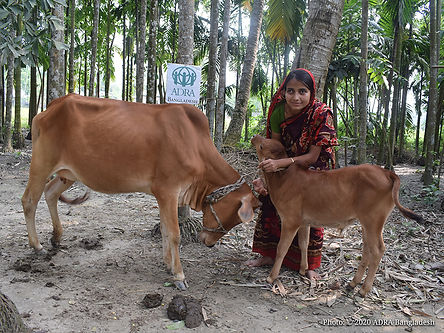Aklima with her cows.jpg