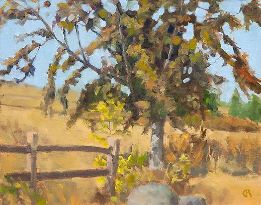 Powell-Butte-Tree..jpg