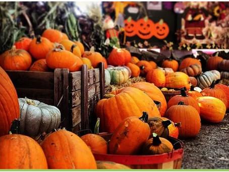 Welcome, Great Pumpkin: Pumpkin Patches We Love!