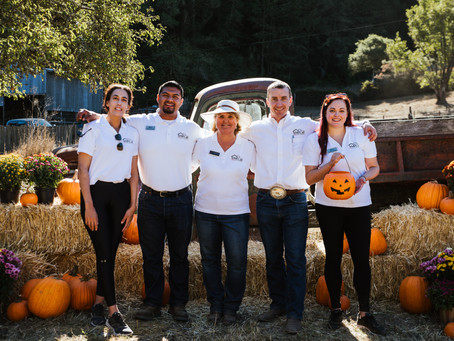 'Tis the Season for Pumpkin-ing! Check Out These Great Sonoma County Pumpkin Patches