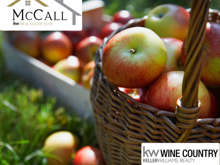 A is for Apple: Sonoma County Apple Picking Experiences