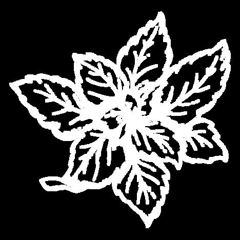 mint leaf.png