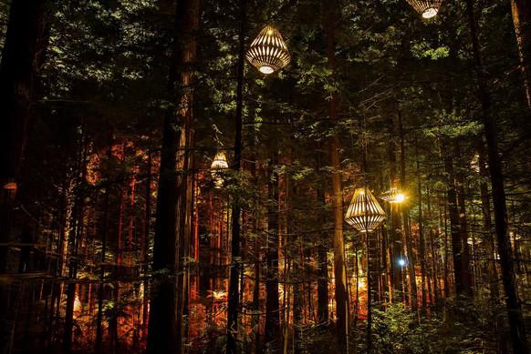 RedWoods Forest 1.jpg