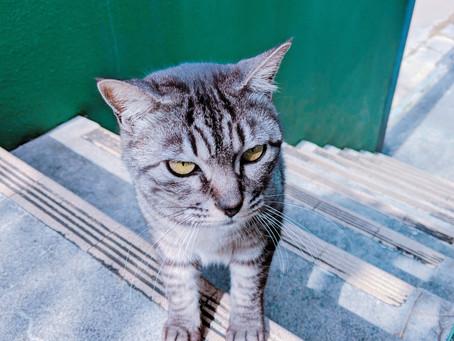 沖縄l恩納村ダイビングl沖縄バク転教室lジュニアダイバーlPADI島猫