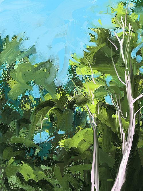 """Birch Trees 1"""