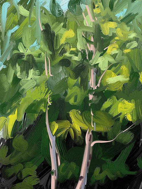 """Birch Trees III"""