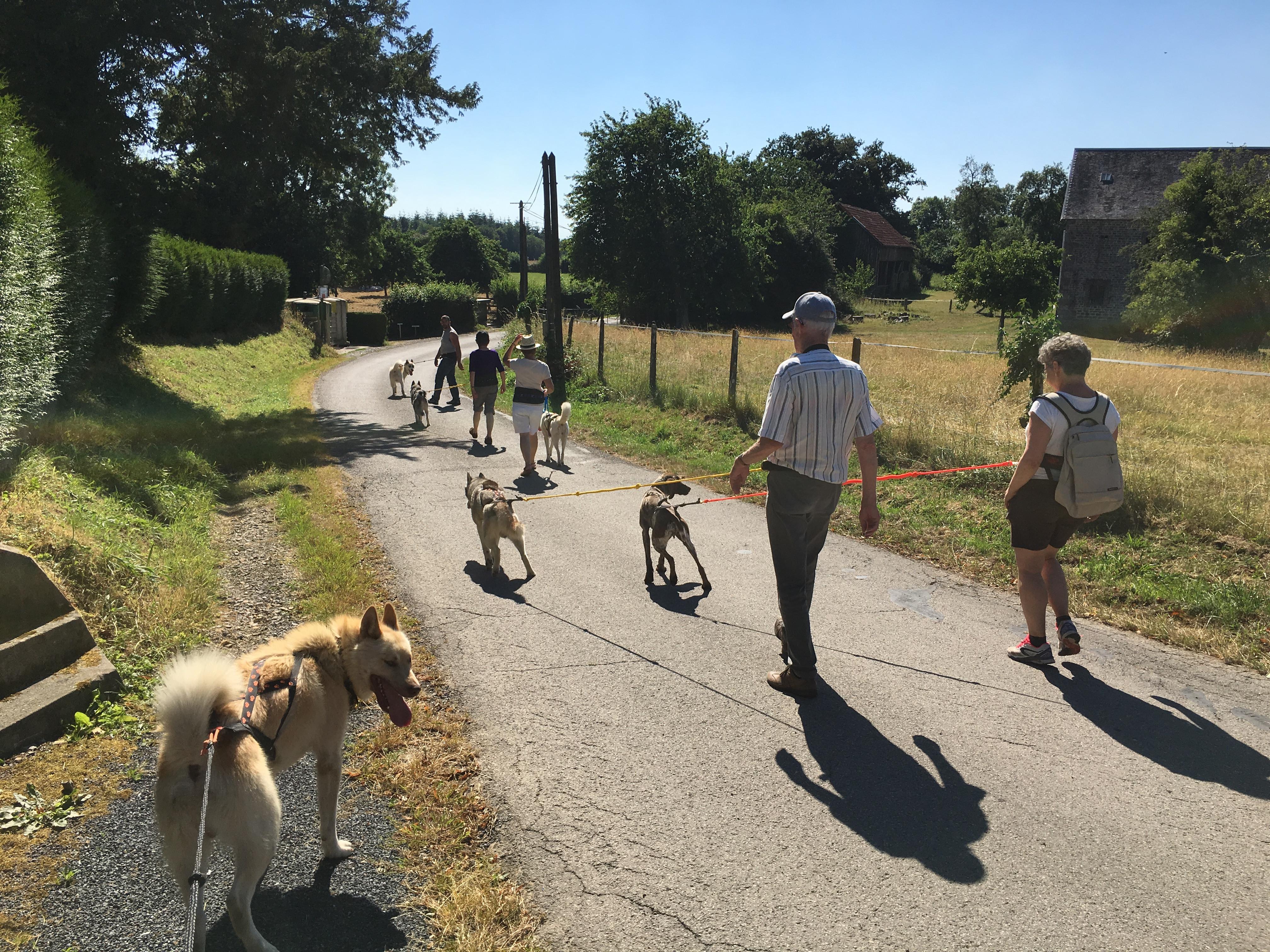 Cani-marche