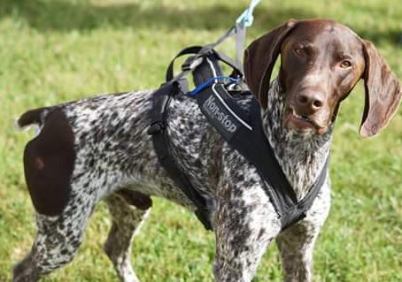Comment mesurer son chien ?