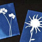 Ode to Anna Atkins