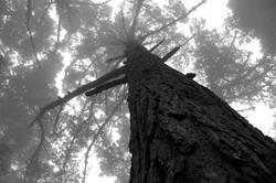 Golden Gate Fog - Ginger Burrell