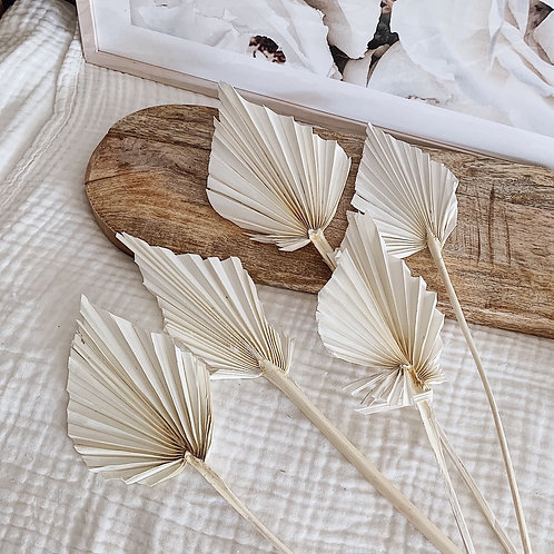 Palms séchés - Blanc