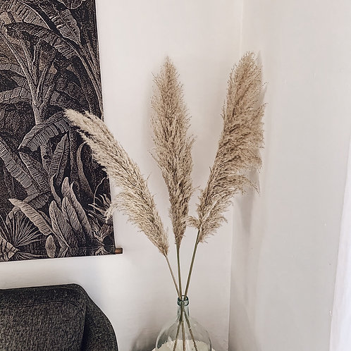 Pampas Fluffy - Lot n°102