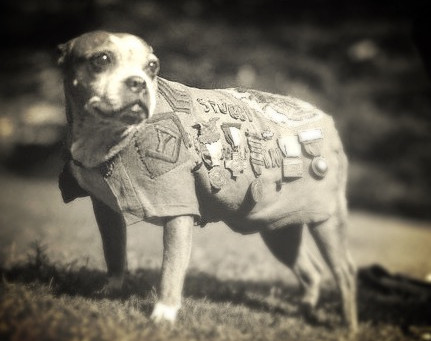 Sergeant Stubby, We Salute You!