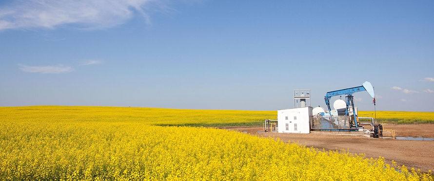 Alberta Canola field with clear blue sky and blue pumpjack