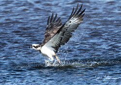 Osprey b