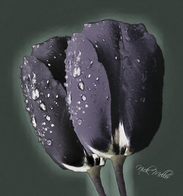Black Tullips
