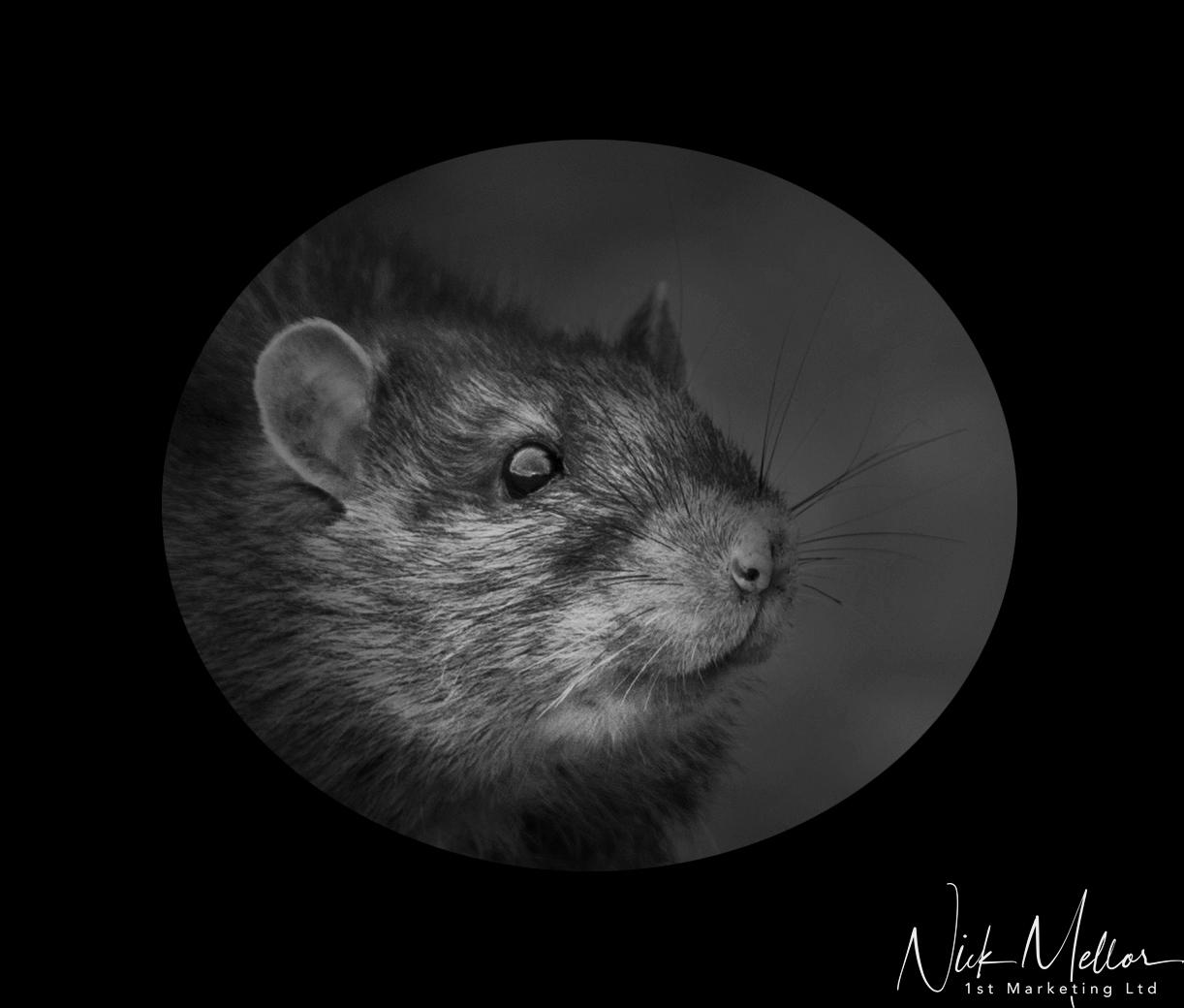 Mr Ratty