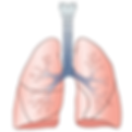 Pair of lungs.png