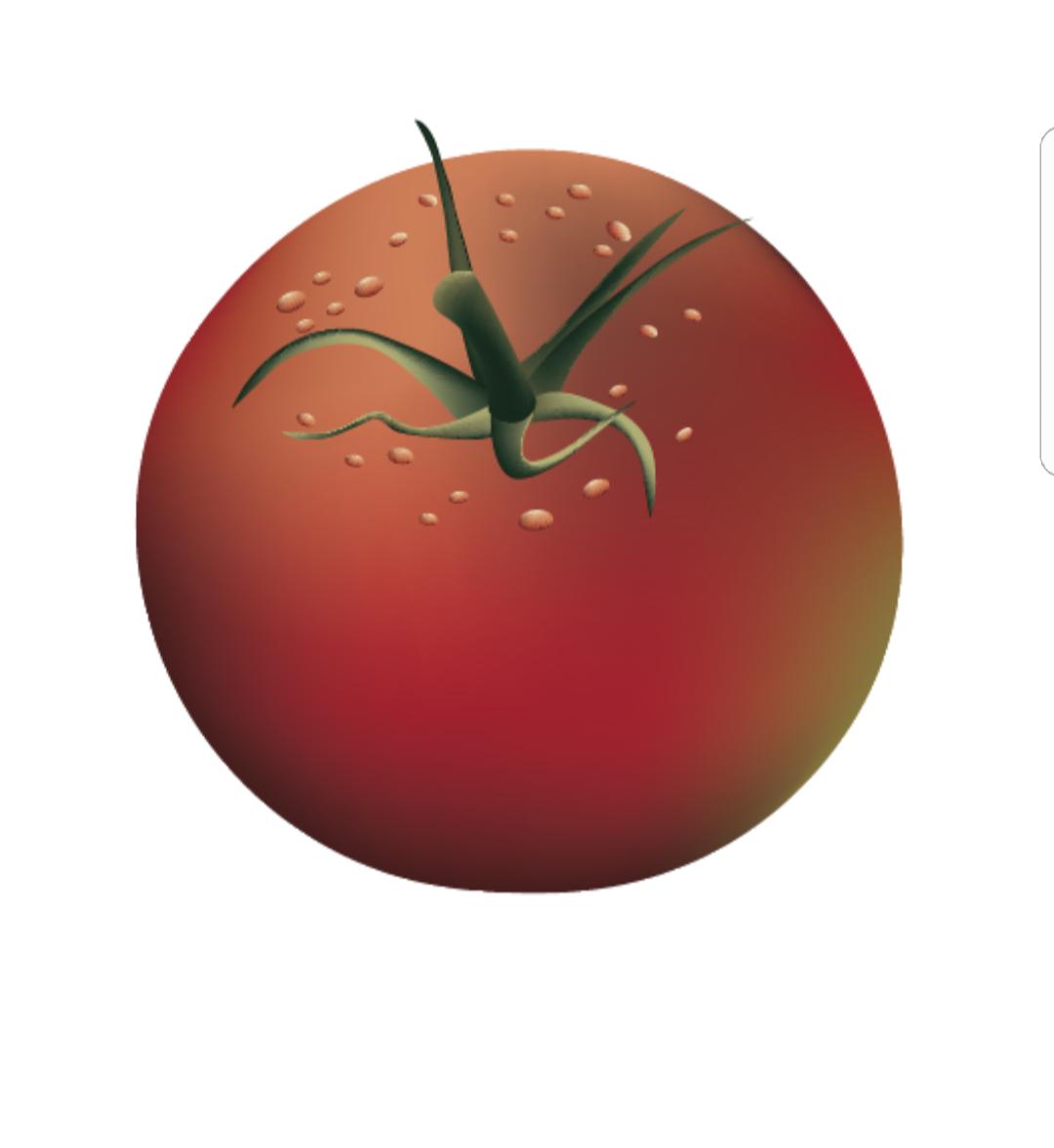 ציור של עגבניה באילוסטרייטור