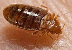 New York Bed Bug Attorneys | New York | Law Office of Dimitrios Kourouklis, Ph.D.