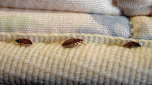 Were You Exposed To Bed Bugs While Staying At A Hotel?