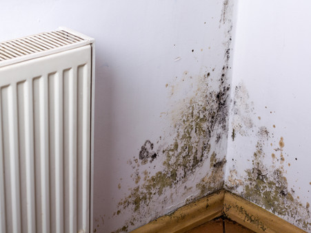 FIND MOULD BEFORE IT BECOMES A MAJOR PROBLEM