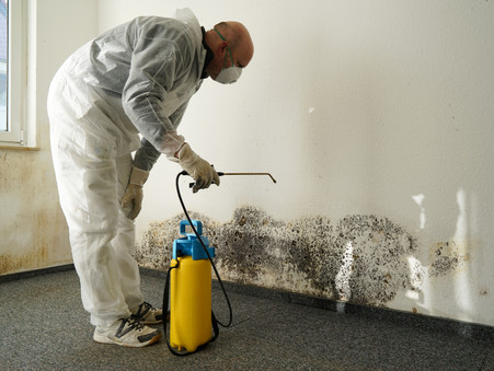 CHANGES ARE NEEDED TO ADDRESS 'DANGEROUS MOULD ISSUES' experts say.