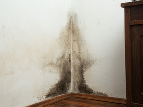 A Safe, Natural Alternative in Mould Removal