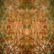 Autumn Leaves 2020 (1)