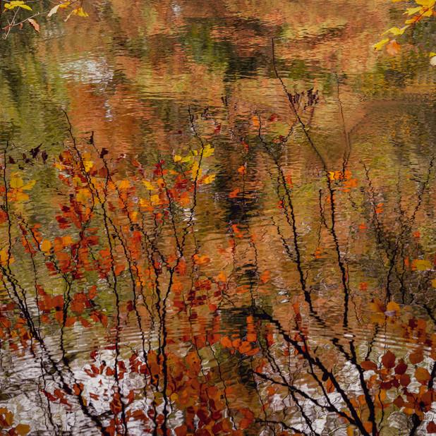 """""""Autumn Leaves 1"""""""