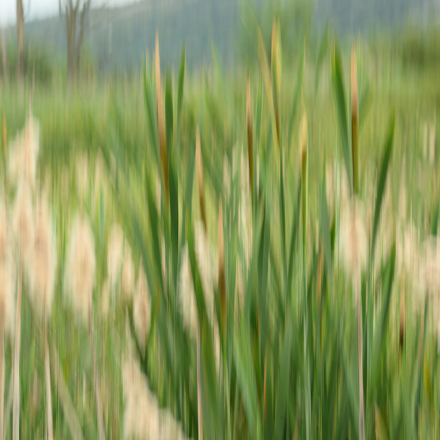 """Peat Lands""."