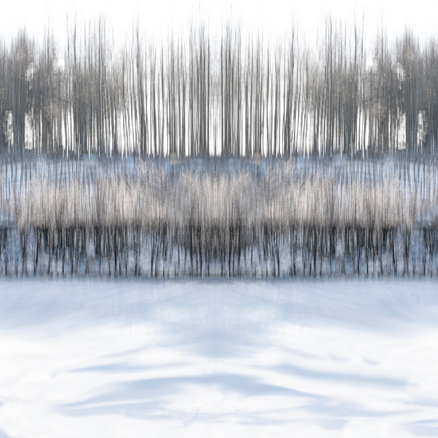 """""""Trees in the Snow 2"""""""