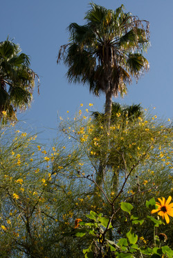 Alice Keck Park, Santa Barbara