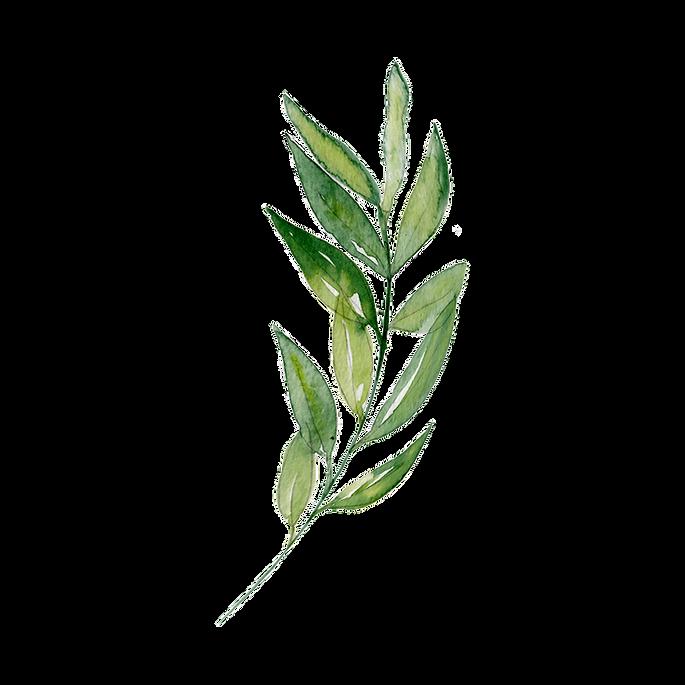 —Pngtree—watercolor leaf transparent dec