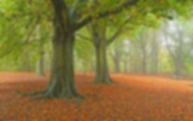 Hampstead Heath 3.jpg