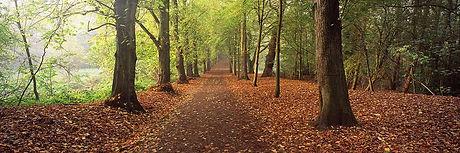 Hampstead Heath 2.jpg
