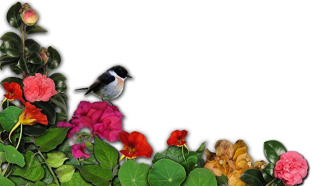 Création de bijoux inspirés par la faune et la flore de la Réunion, bijoux karol de laleu