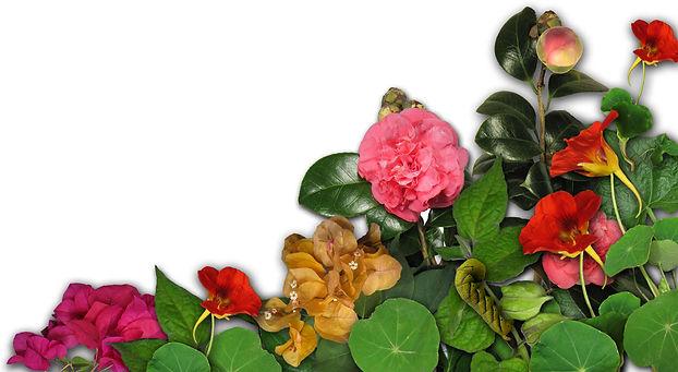 Bijoux karoldelaleu.com, bijoux faune et flore de la Réunion