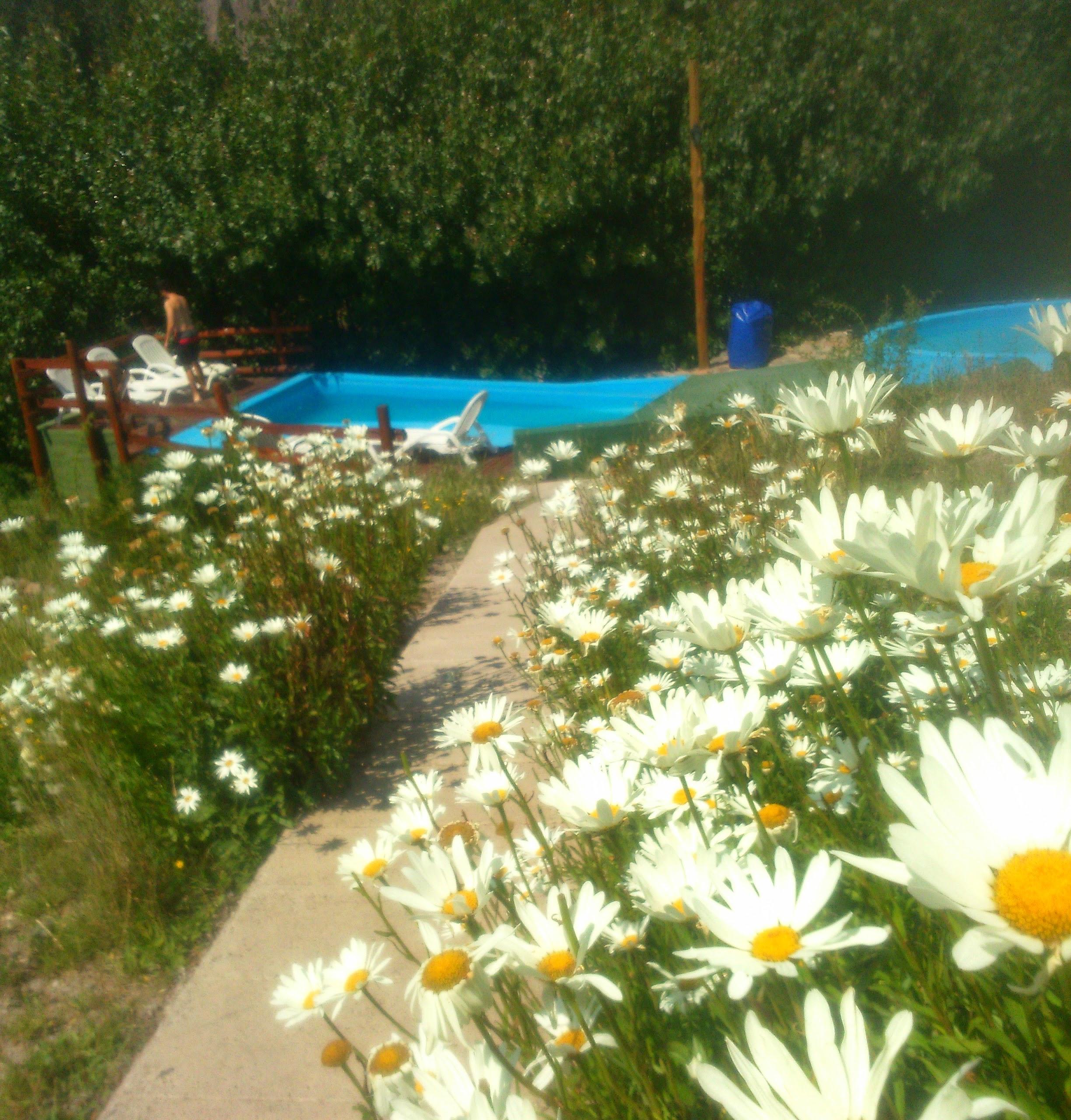 Jardín de Margaritas y piletas
