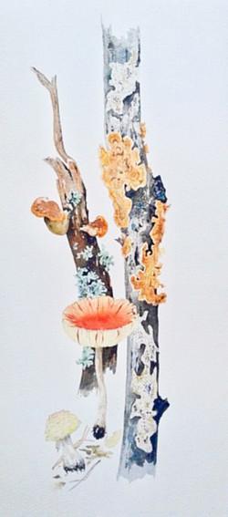Joseph Bailey_Native Virginia Fungi-rev.