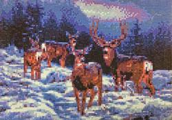 Bucks in the Snow