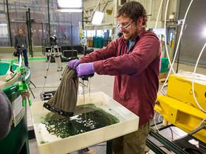 'ฟองน้ำซับน้ำมัน' นวัตกรรมใหม่ที่สามารถช่วยแก้ปัญหาน้ำมันรั่วได้