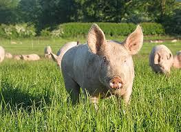 Pork Farm.jpg
