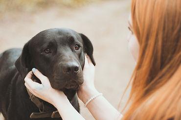 Lost Dog Arcadia Vet