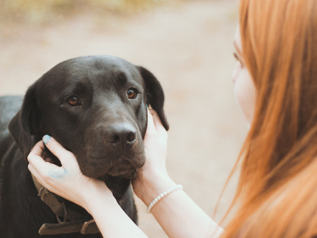The Guide to Becoming an Effective and Loving Foster Dog Parent