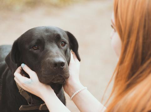 如何與新領養成犬建立互信關係
