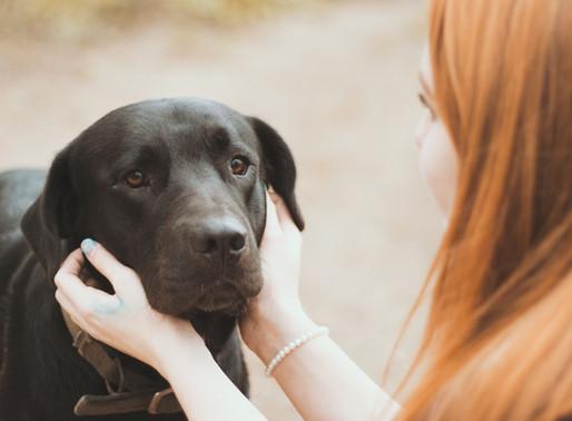 關於寵物臨終諮詢
