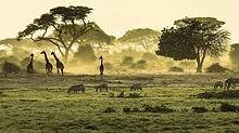 Kenya.jpeg