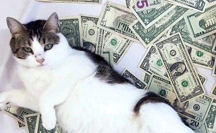 donate to cats_edited.jpg